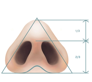 nostrils shape